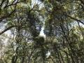 Forêt de Yoyogi TOKYO